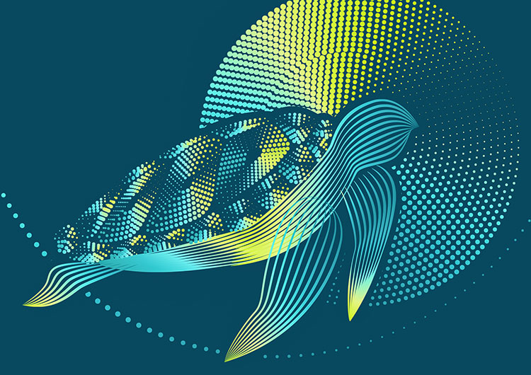 Lines & Dots Modalsweat nutzt den Moire Effekt